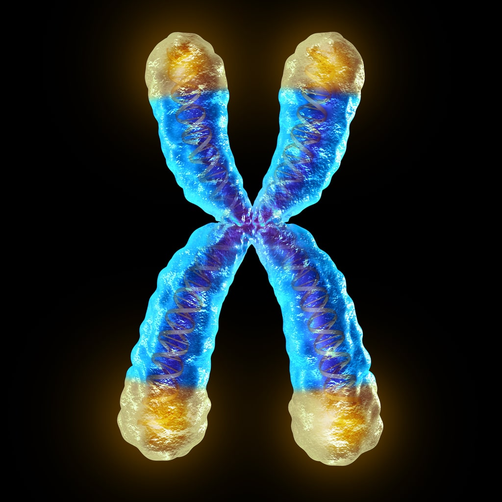 A telomere is the end of a chromosome.